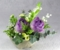 紫八重チューリップ ラスト1