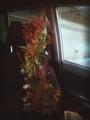 お花にシートベルト