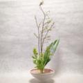 青文字、葉蘭、菜の花