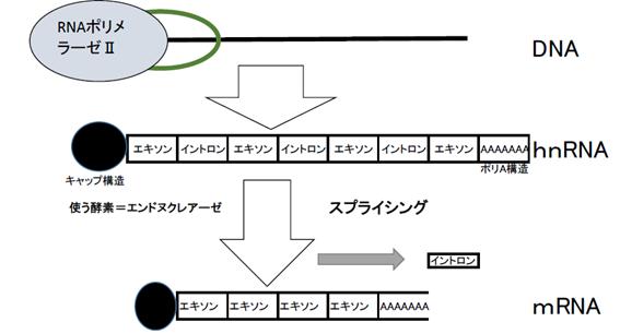 f:id:nitrotake8:20180301010046p:plain
