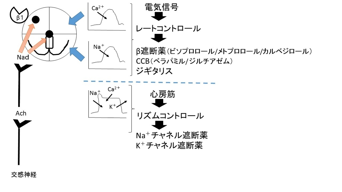 f:id:nitrotake8:20190411182953j:plain