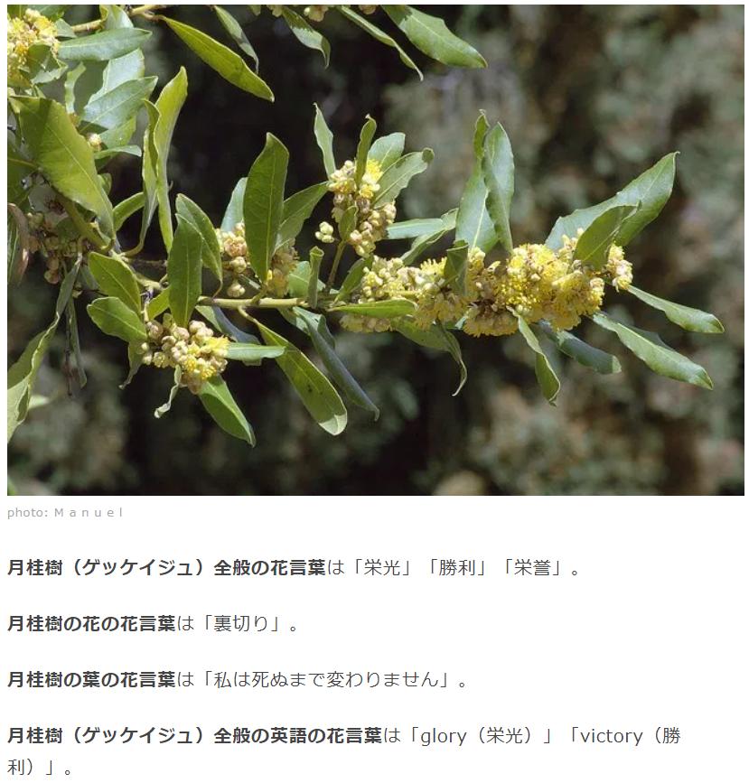 f:id:niwapuro:20210227221806p:plain