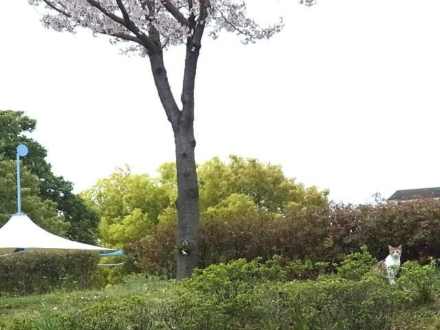 f:id:niwasawa:20110410161604j:image