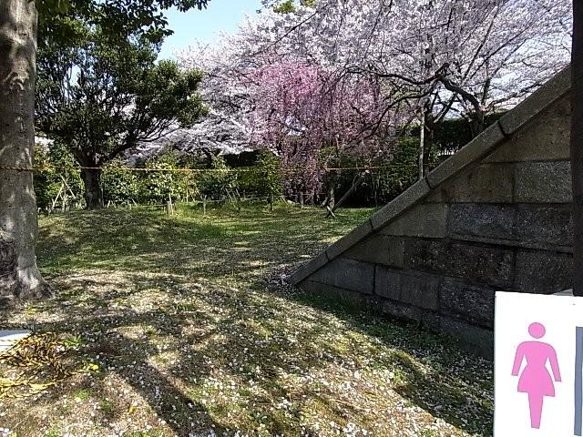 f:id:niwasawa:20110410161606j:image