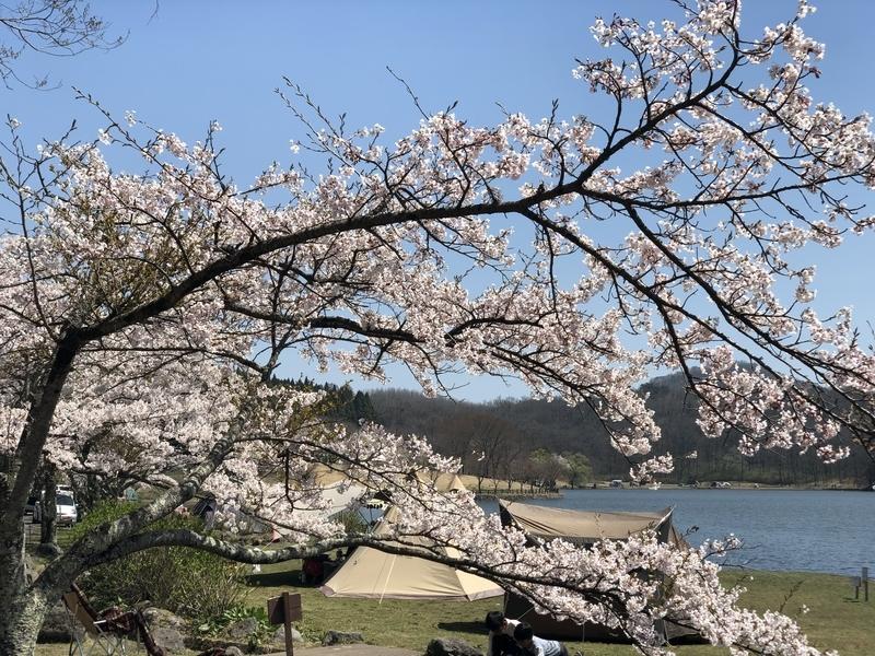 f:id:niwatori-napi:20190622105701j:plain
