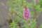 [緑][花]