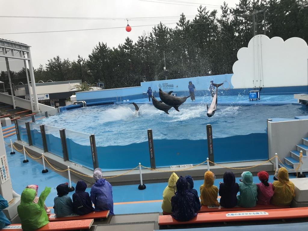マリンピア日本海イルカショー