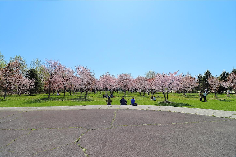 モエレ沼公園の桜並木の景色です