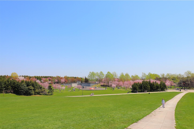 モエレ沼公園のプレイマウンテンからみた桜並木です