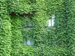 f:id:nmikami:20090919155059j:image:right