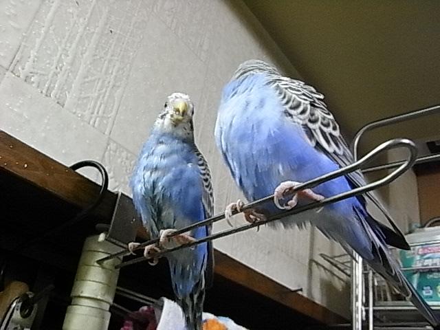 サキちゃんとナカちゃんは仲良し