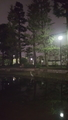 荒川区役所池のアオサギ