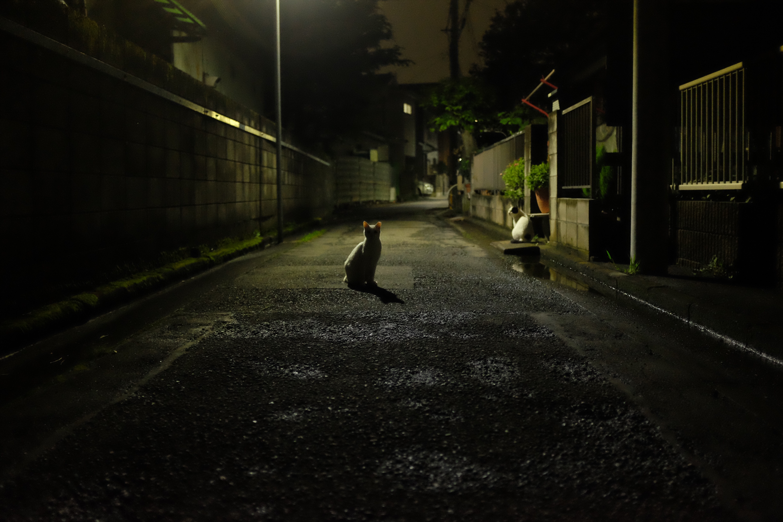 f:id:nnnaoki84:20160914223357j:image