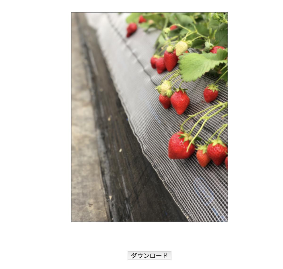 画像(写真)のリサイズがブラウザ上で簡単にできる画像加工ツールを公開しました!