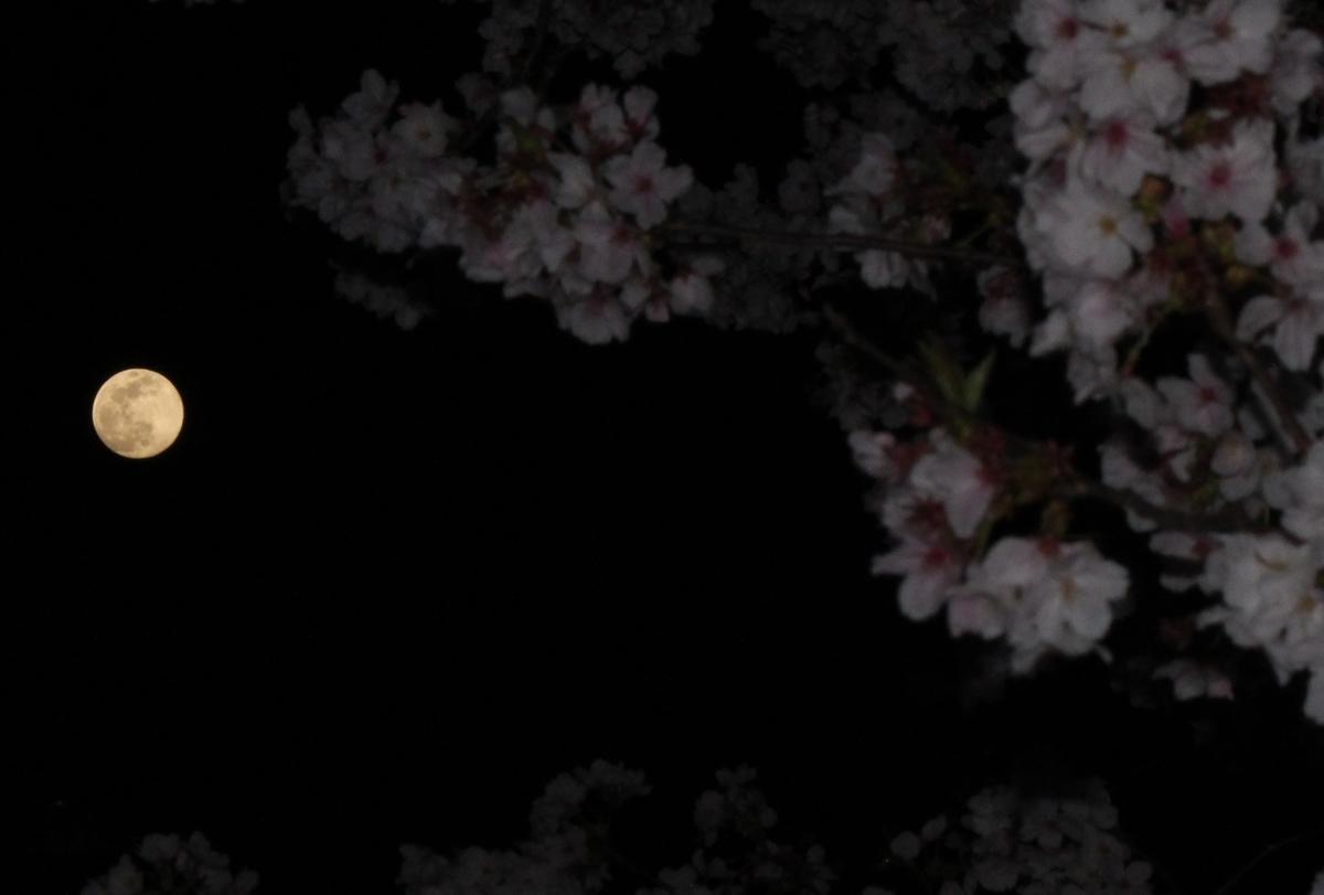 f:id:no1toukinmaru:20200408112546j:plain