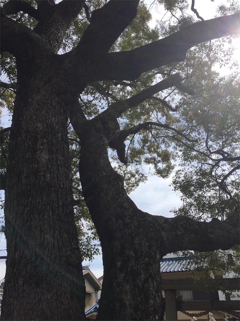 f:id:noacocomiruku-3:20170302101955j:image