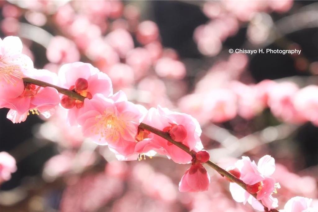 f:id:noacocomiruku-3:20170306111640j:image