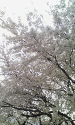 ジム 桜2