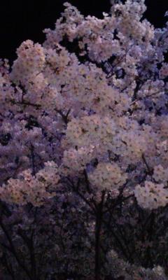 ジム 夜桜