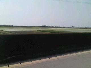 20100619 長閑な田園風景