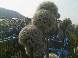 20100619 腐海の植物??