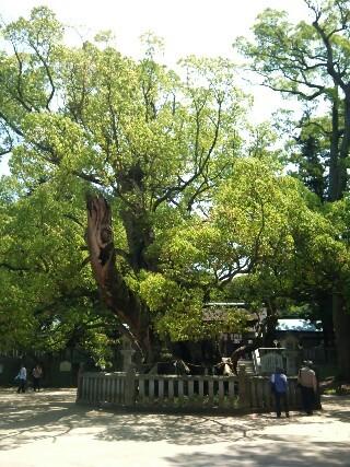 20110508 しまなみ練 大山祇神社