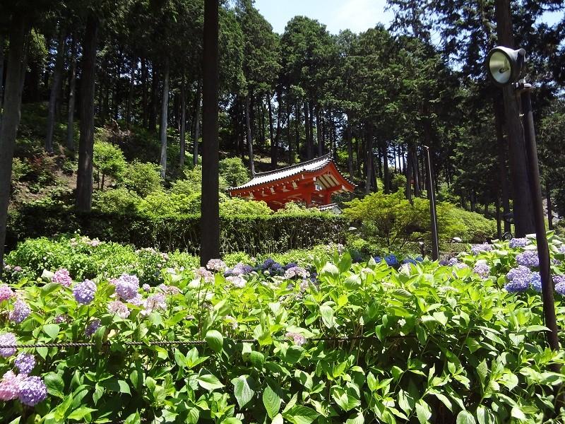 20110625 京都旅行