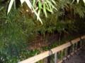 20110625 京都旅行 祇園界隈
