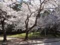 0407 昼練(L3-4):仁尾・詫間・三野Ride 桜(琴弾公園)