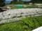 20120609 昼練:フラワーパークうらしま