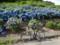 20120610 昼練:香川・徳島ライド R192沿い