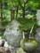 20120812 昼練:ブナの活水