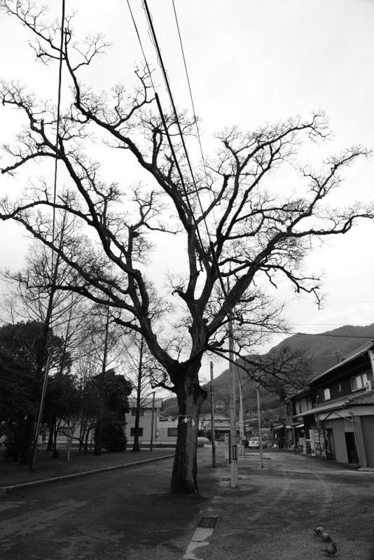 20130114 Shin☆散歩