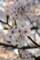 20130403 桜:市民会館にて…