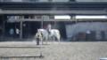 20130413 観音寺乗馬クラブ