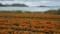 20130421 浦島フラワーパーク