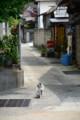 20130526 MTB昼練:浪打神社参道にて…
