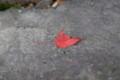 20131123 昼練:紅葉ライド