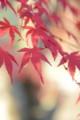 20131124 Shin☆散歩 法泉寺