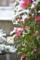 20140208 雪化粧