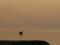 20140522 夕練:寒川海水浴場にて…