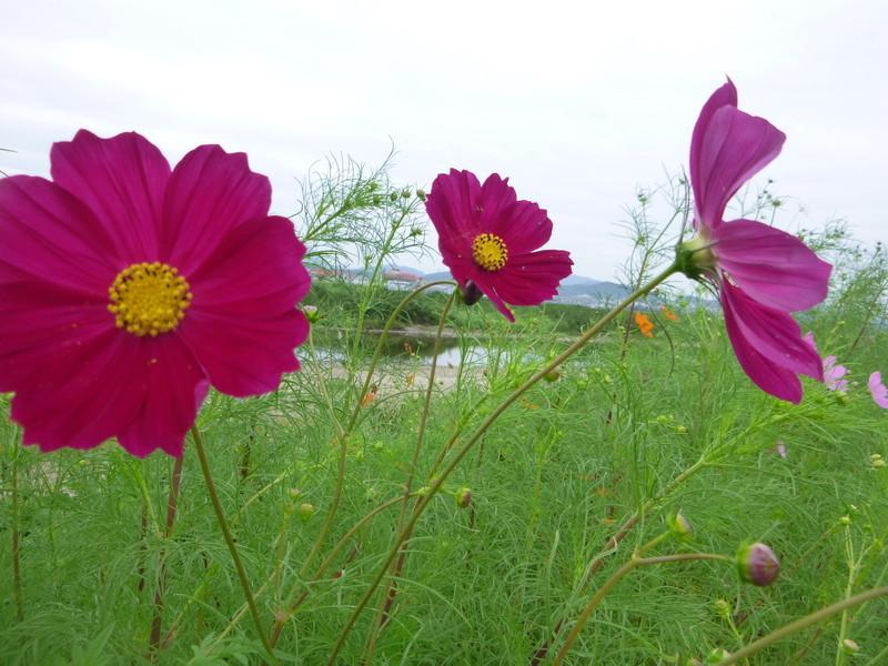 20140920 財田川沿い
