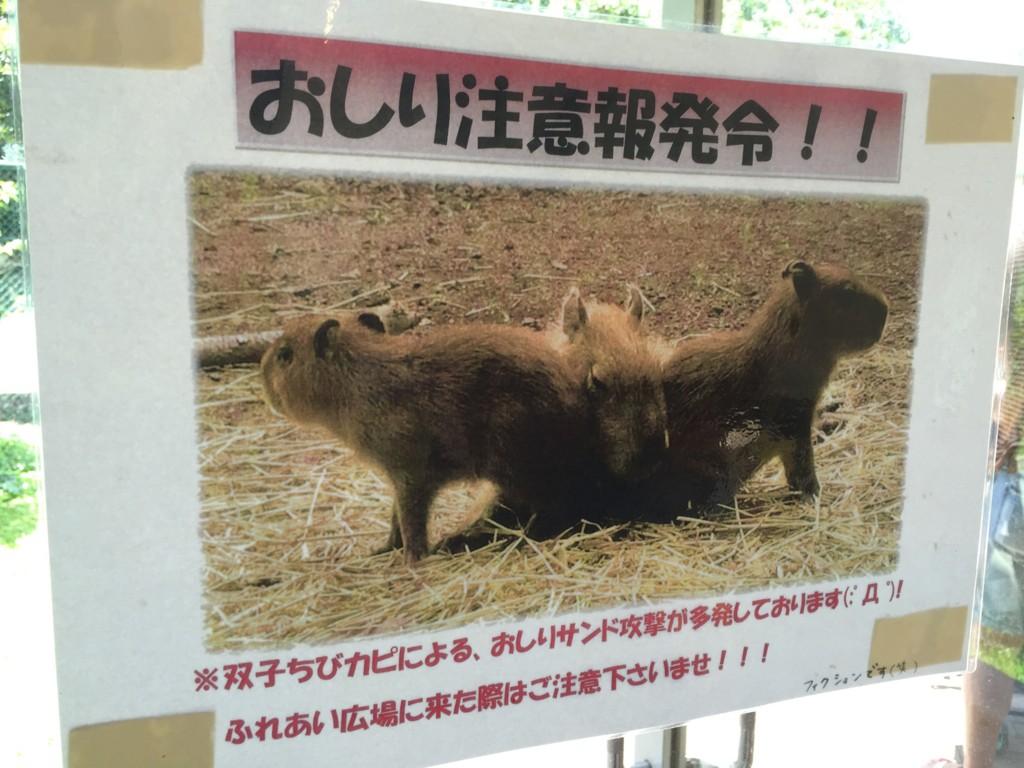 f:id:noanohakobune:20150720110526j:plain
