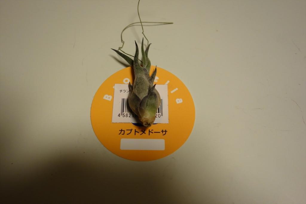 f:id:noazamino:20170305224341j:plain