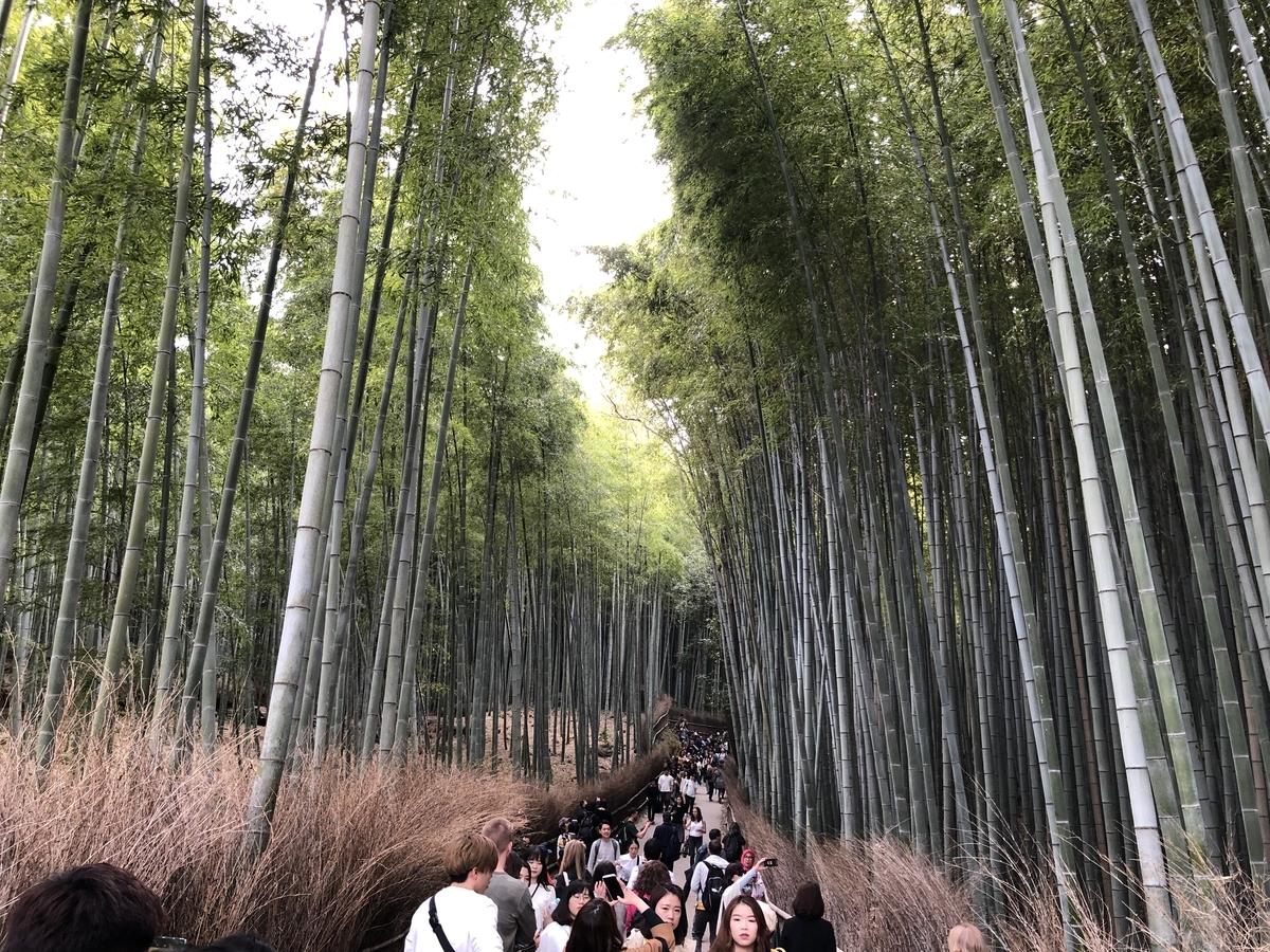 竹林 京都嵐山