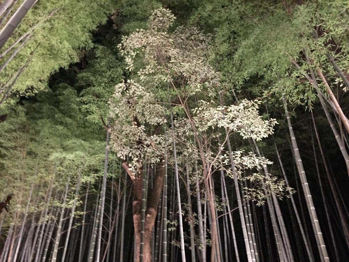 嵐山竹林 京都嵐山 ②
