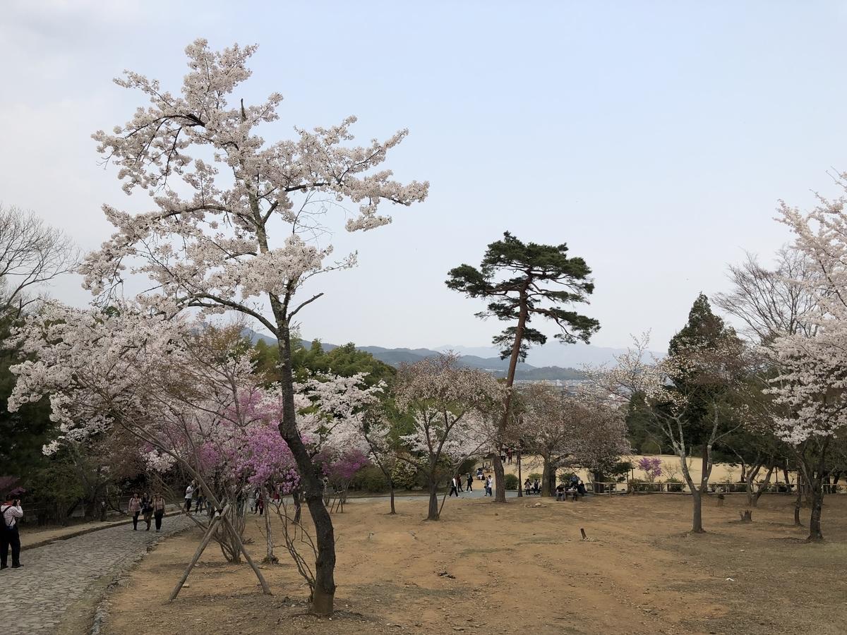 嵐山 さくら 京都