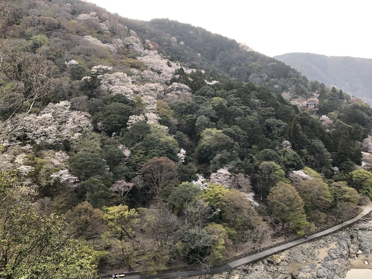 嵐山竹林 京都嵐山 亀山公園 絶景