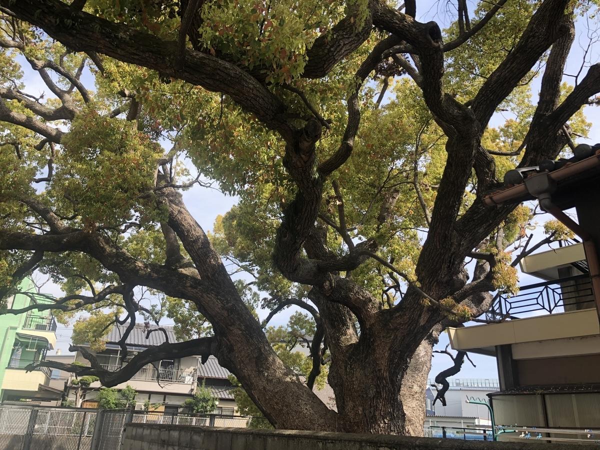 クスノキ 堤根神社