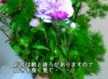 f:id:noblekanazawa70:20151230192719j:image:medium